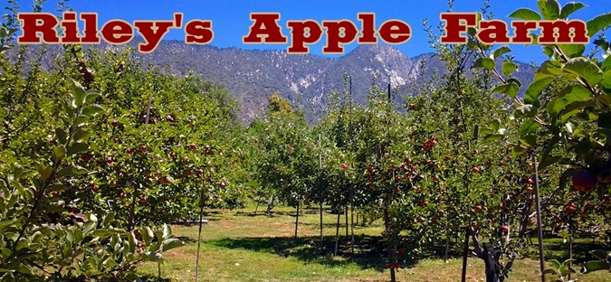 apple orchards near me. apple wood -$2 / lb orchards near me